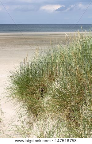Dunes on gorgeous wide Jammerbugt beach near Roedhus - Jutland - Denmark in August 2010