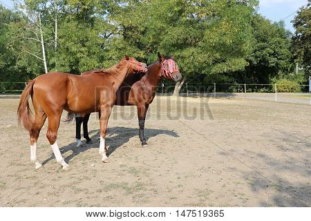Horse and mare together in the paddock