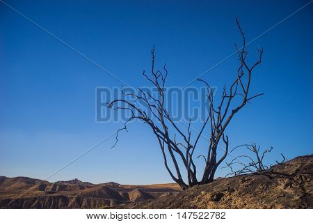 Dead Tree On Ridge