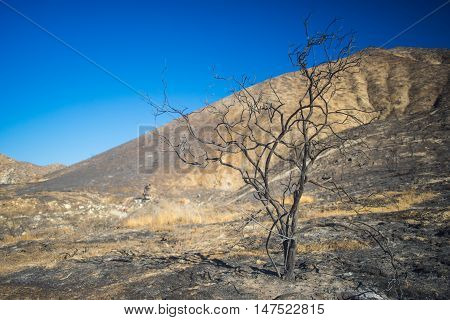 Burned Savanna