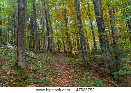 Trail in the deciduous autumn forest. Nature