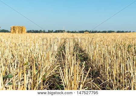Hay straw and Bales on the harvested field
