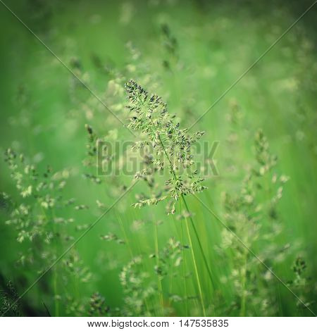 Green grass meadow suitable for backgrounds or wallpapers, natural seasonal landscape