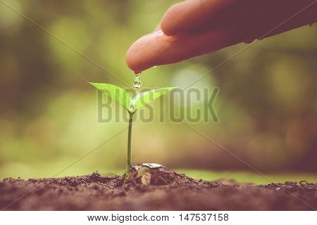Hand watering a tree growing on fertile soil with green and yellow bokeh background / nurturing baby plant / protect nature