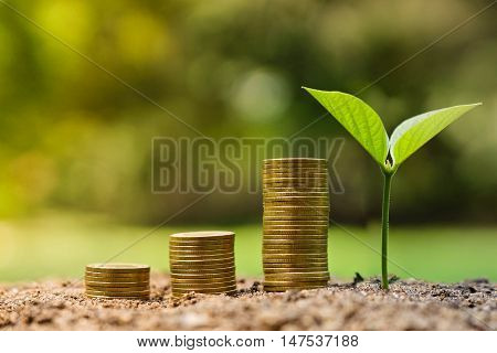 Business with csr practice / A tree and a stack of coin