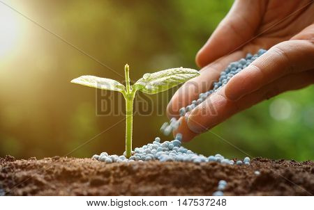 Agriculture / Hand pouring chemical fertilizer to a young green plant with morning sunlight / Nurturing baby plant / protect nature / planting tree