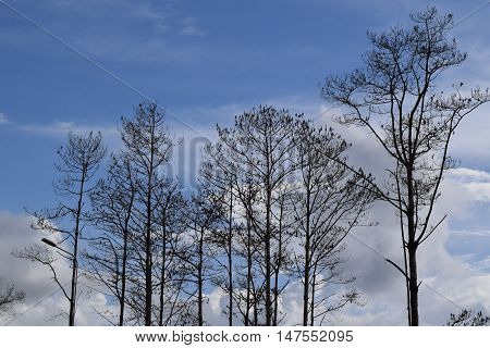 Leafless Tree On The Cloudy Sky Background