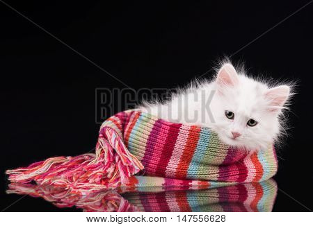 Cute fluffy kitten in the knitted scarf over black background