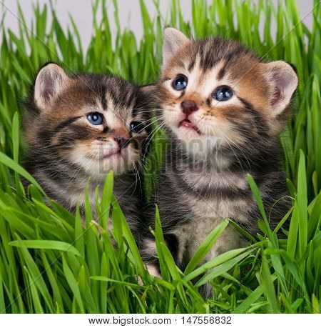 Cute little kittens in the bright green grass over grey background