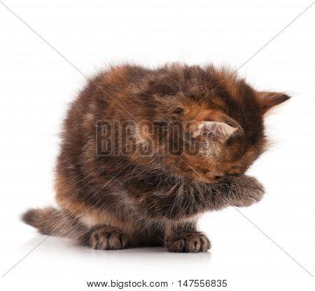 Cute little siberian kitten over white background