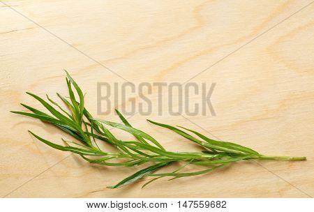 Tarragon Twig