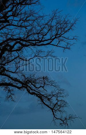 Black leafless trees silhouettes over dark blue sky