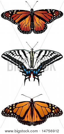 three types of vector illustrated butterflies