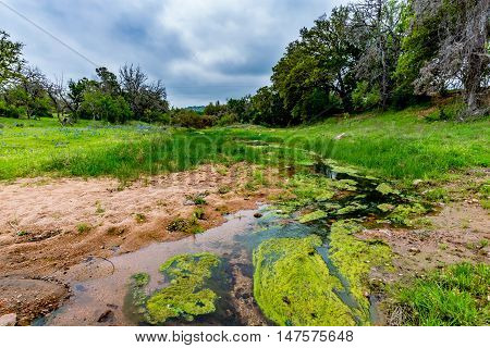 Moss Covered Creek in Grassy Clearing with Wildflowers in Texas
