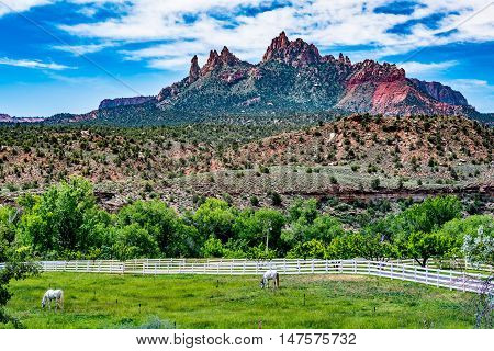 The Beautiful Rock Formations Near Zion National Park Utah, with Two White Horses in Pasture with White Fence.