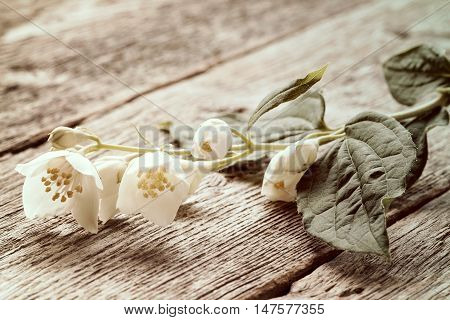Wild flower lying on old wooden background