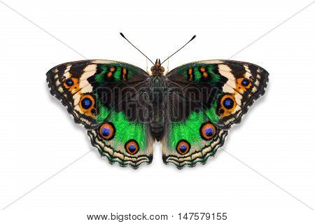 Green Color Blue Pansy Butterfly