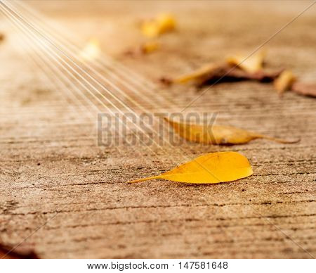 Leaves on the cement floor. Light from the sun effect.