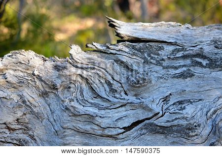 Patterns and texture of knotted wood grain on a fallen tree trunk in woodland
