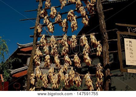 Shu He China - April 26 2006: Bunches of corn on the cob hang from bamboo poles to dry in the intense sunshine