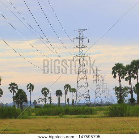 Power lines running through rice fields past the sugar palms near Ranot, Thailand
