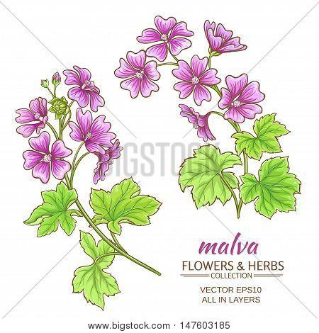 malva flowers vector set on white background