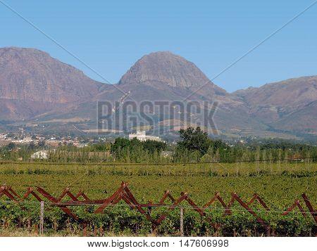 Grape Farm, Paarl North, Western Cape South Africa 03a