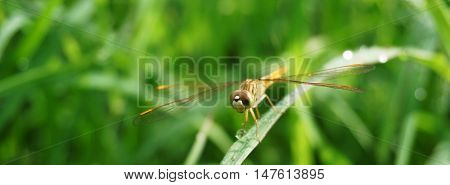 dragonfly on nature green nature bokeh background