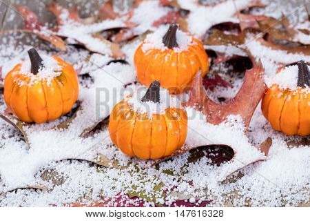 Autumn pumpkins with snow and leaves. Selective focus on front pumpkin.