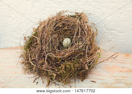 blackbird nest with bird´s egg near the house
