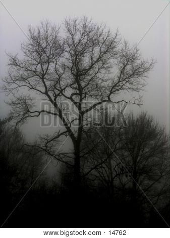 Dark trees in fog.