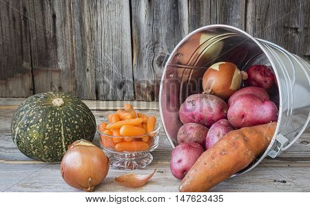 horizontal image of a silver galvanized pail lying on its side filled with red potato and onion and butternut squash and some carrots lying beside it with an old wood background