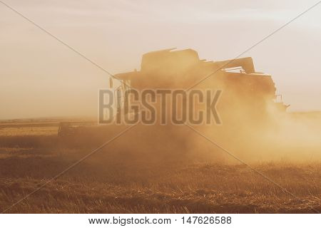 Wheat Field At Sunset With A Combine Harvester In Action