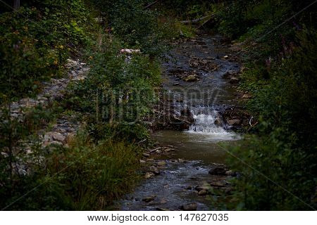 River in the mountains Carpathians a raging river nature in the woods nature in the Carpathian Mountains the river Tisza summer landscapes Ukraine