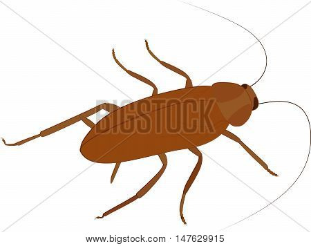 Cockroach vector icon. cartoon brown insect isolated on white background