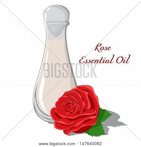 Rose essential oil with a bud in the foreground isolated on white background