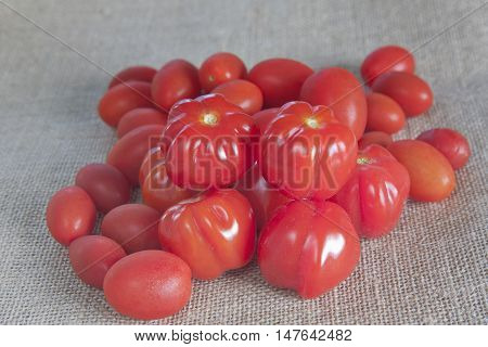 small juicy red tomatoes on a hessian