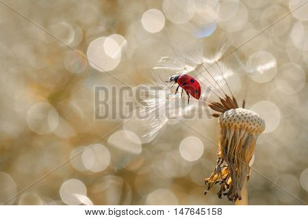 A little red ladybug likes to look down, but for the moment to fly away