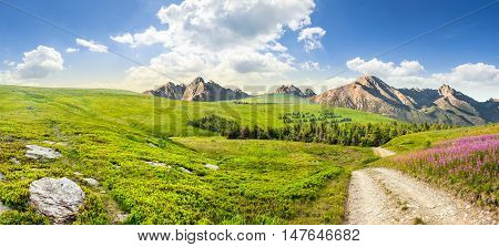 composite summer landscape with high wild grass and purple flowers near the road to forest on mountain hillside and rocky peaks in the distance