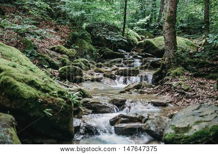 Clean and fresh mountain brook flowing in summer forest