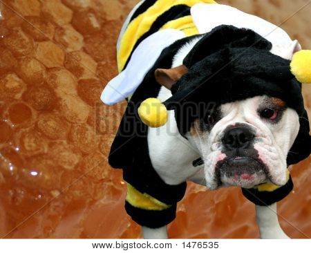 Bulldog Bee With Honeycomb Background