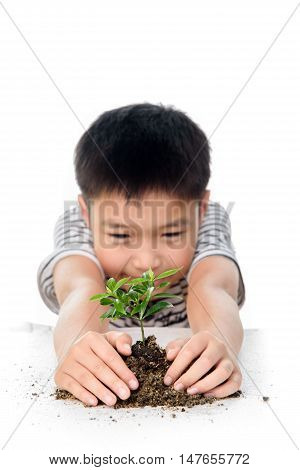 Hand And Young Plant