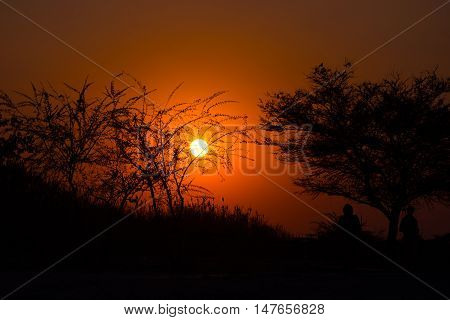 Colorful Sunset In The African Bush. Acacia Trees Silhouette In Backlight. Orange Red Clear Sky.