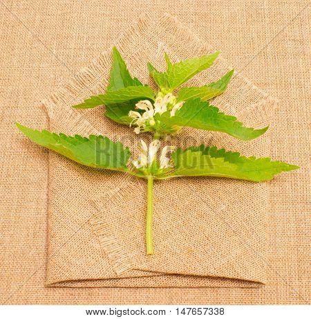 Fresh Green Nettle On Background Canvas
