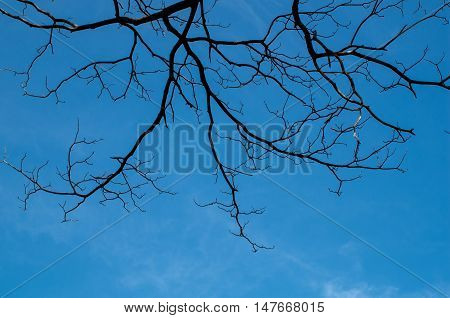 The leafless tree in dark blue background