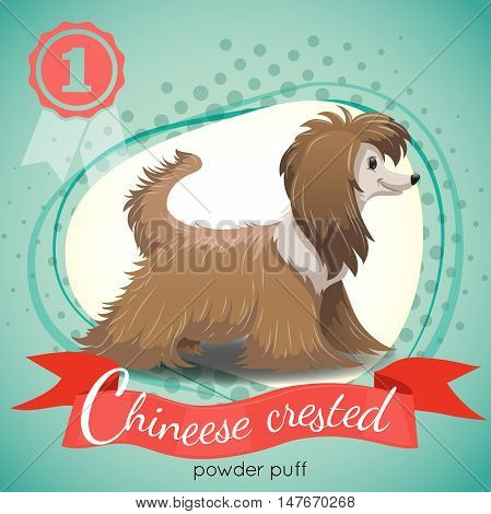 Chinese Crested Powder Puff Dog standing. Colorful background with halftone dots. Champion medal. Best in show. Vector illustration.