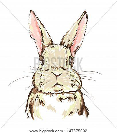 illustration of a cute bunny, graphic illustration rabbit