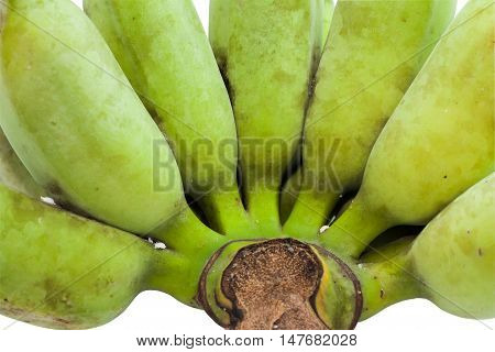 Close up of Green ripe cultivated banana