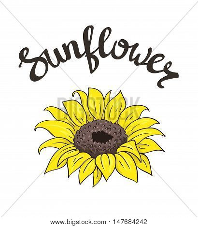Vector hand drawn yellow sunflower on the white background with lettering