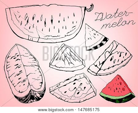 Hand Drawn Watermelon image. Vector illustration on a light pink background. Unique artistic concept in outlined ink style.